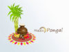 Happy-Pongal-Wishes (2)